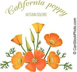 花, イラスト, ベクトル, カリフォルニア, arrangement., poppy.