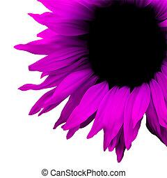 花, イラスト, 背景