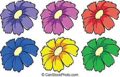 花, カラフルである, 6