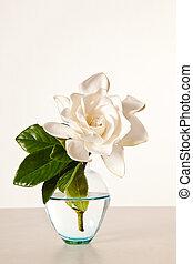 花, クチナシ, 白