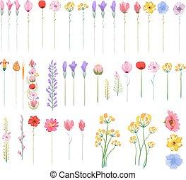 花, グラフィック, セット, 要素