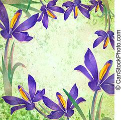 花, グランジ, 春, フレーム, クロッカス, 緑の背景