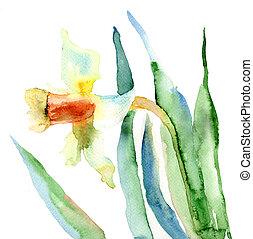 花, スイセン