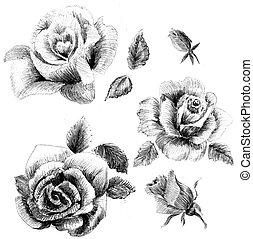 花, スケッチ, セット