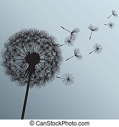 花, タンポポ, 上に, グレーのバックグラウンド