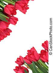花, チューリップ, ボーダー