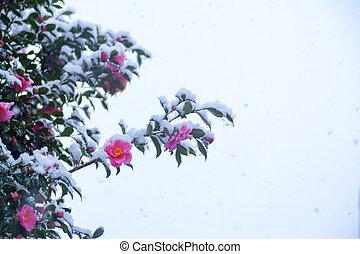 花, ツバキ, うすら寒い, 雪
