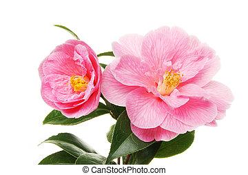 花, ツバキ, 2