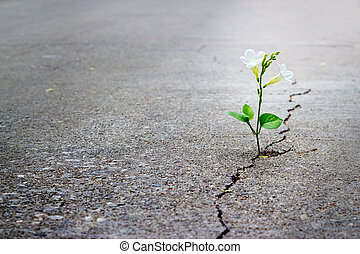 花, テキスト, ブランク, フォーカス, 通り, ひび, 成長する, 白, 柔らかい