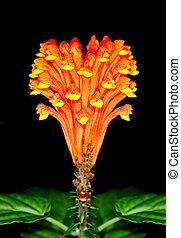 花, トロピカル