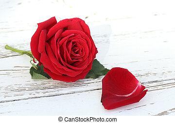 花, バラ, 木, 背景, 白い赤