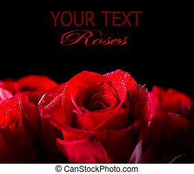 花, バラ, 隔離された, 黒い背景, 赤