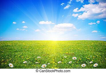 花, フィールド, 春, 日光, 美しい