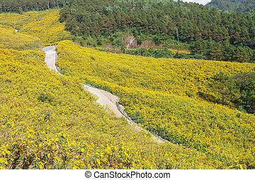 花, フィールド, 黄色