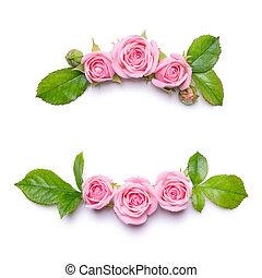花, フレーム, ∥で∥, ピンクのバラ, 上に, a, 白, バックグラウンド。, ボーダー, の, flowers.