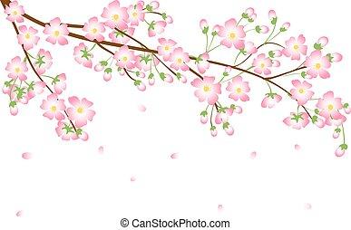 花, ブランチ, さくらんぼ