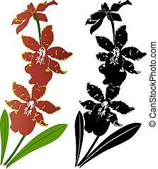 花, ベクトル, 蘭