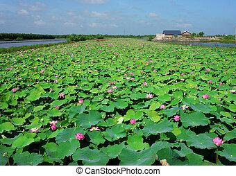 花, ベトナム, ロータス, 旅行, すばらしい, 風景