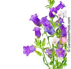 花, ボーダー, 鐘