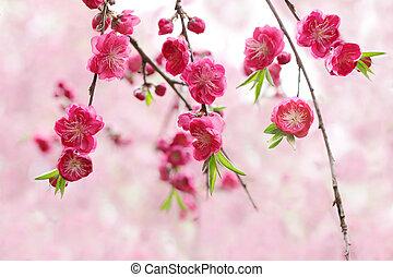 花, マゼンタ, さくらんぼ