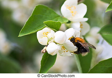 花, マルハナバチ