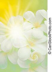 花, ライト, 抽象的, 黄色緑, plumeria, 背景, ぼやけ, 白
