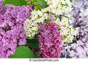花, ライラック, 美しい, 背景