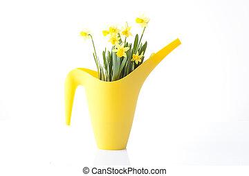 花, ラッパズイセン