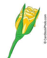 花, 上升, 被隔离, 在懷特上, 背景