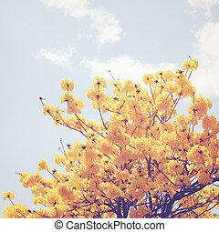 花, 上, 木, 効果, 黄色のこし器, レトロ