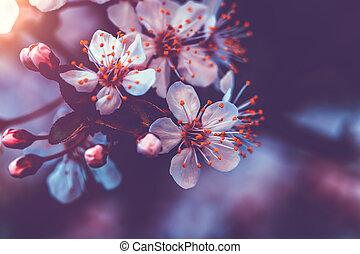 花, 優しい, さくらんぼ
