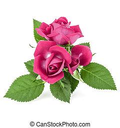 花, 切抜き, バラ, 隔離された, ピンク, 白い背景, 花束