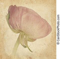 花, 古い, 美しさ, 型, ペーパー, 休日, カード