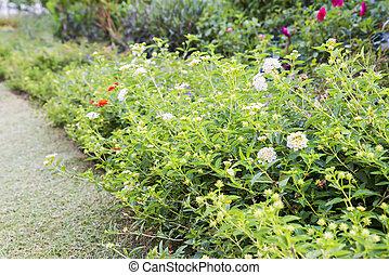 花, 同时,, 树, 在花园