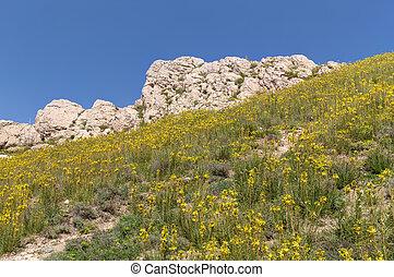 花, 在上, the, 山坡