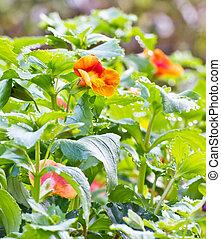 花, 在花园