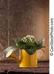 花, 在, 噴壺