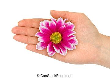 花, 在, 婦女, 手