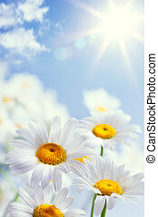 花, 型, 抽象的, 背景, 夏