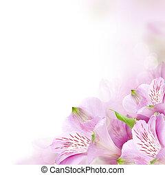 花, 夏, ボーダー, 背景, 花