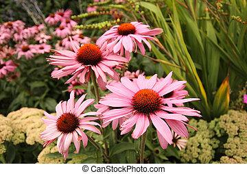 花, 夏, 美しい