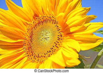 花, 太陽