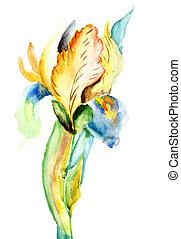花, 定型, アイリス