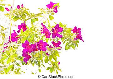 花, 定型, ピンク, 隔離された, イラスト