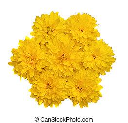 花, 形態, 隔離された, 黄色の花, 構成