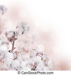 花, 成長した, 綿