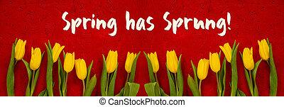 花, 持つ, テキスト, 春, 背景, 黄色, baner, 飛びかかった, 赤いチューリップ