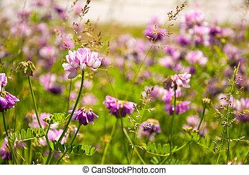 花, 日当たりが良い, 背景