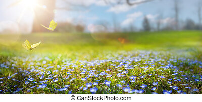 花, 春の花, 公園, 4 月