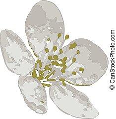 花, 春天, 性质